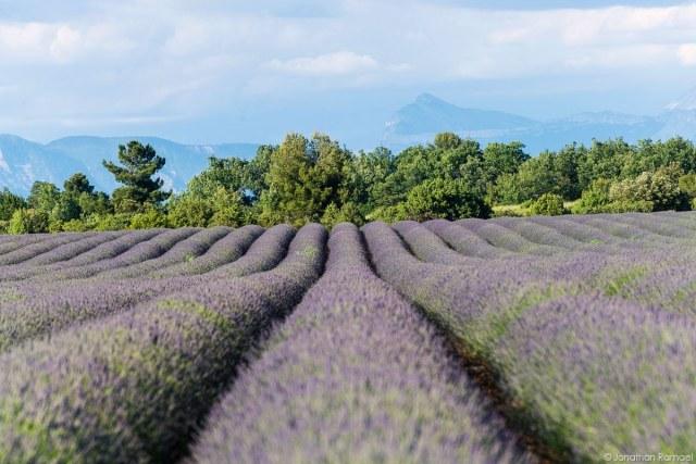 Provence klein-7