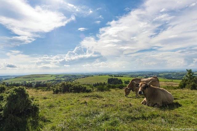 Spread – Koeien van het Aubracras